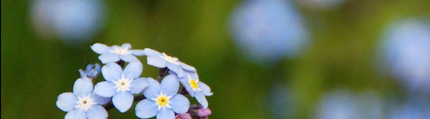 flowers-e1545067799688.jpg